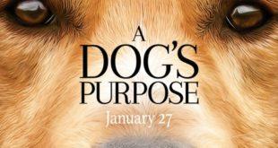 A dog`s purpose Bailey